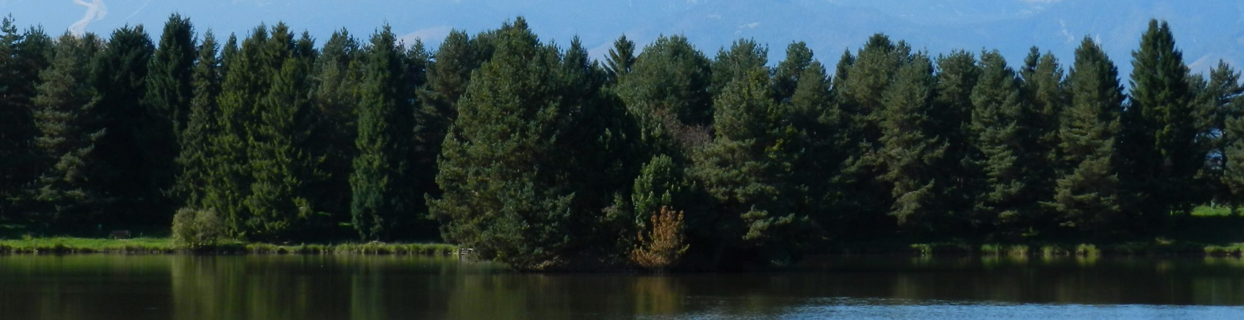 Evergreen Donor Tree: image of evergreen forest